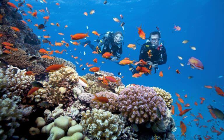 Còn nếu thích được hoà mình vào thiên nhiên, thì Hòn Thơm là lựa chọn không thể chuẩn xác hơn khi hòn đảo là nơi có những dải san hô được đánh giá là đẹp bậc nhất ở nước ta.